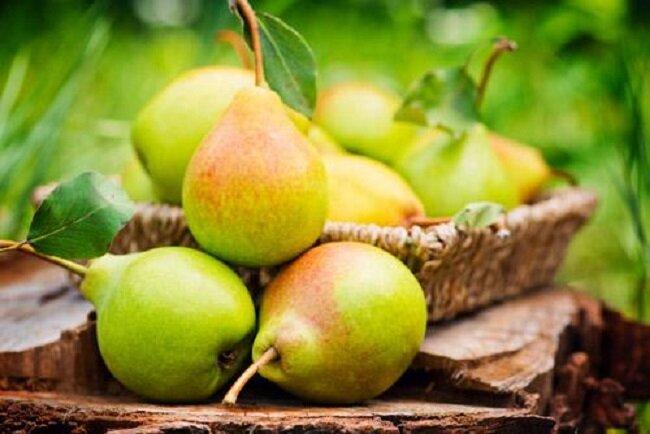 خواص درمانی گلابی، میوه شگفت انگیز، برگ درخت گلابی